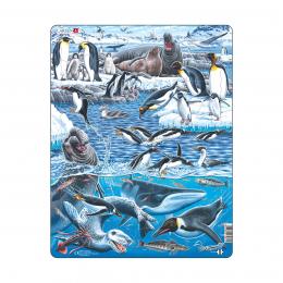 Животный мир Антарктики, 66 деталей